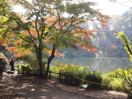 日立中央研庭園 モミジ (13)