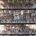 Photos: 2月_豪徳寺 1