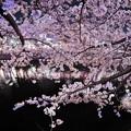 Photos: 桜漫遊・大岡川(夜編)。