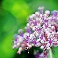 写真: 六月の花。