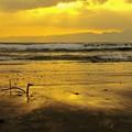 写真: 浜辺のメッセージ。