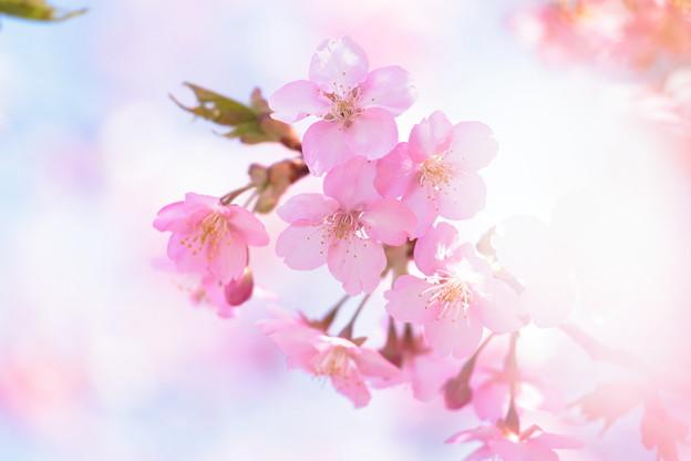 写真: もうすぐ春ですね♪