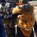 シマウマな彼氏と。。彼女はライオン。