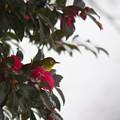 写真: 雪見メジロ1