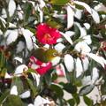 写真: 雪見メジロ2