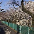 Photos: 大蔵住宅(1)