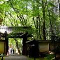 Photos: 竹の寺