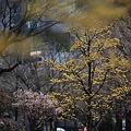春かぜ吹く街2