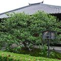 Photos: 地蔵院(椿寺) (2)