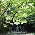 Photos: 崇福寺跡(金堂跡)