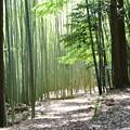 Photos: 百穴古墳群の竹林