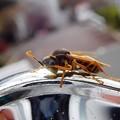 ペリカンの家の蜂 (2)