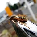 ペリカンの家の蜂 (3)