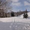 Photos: 今日の散歩コース