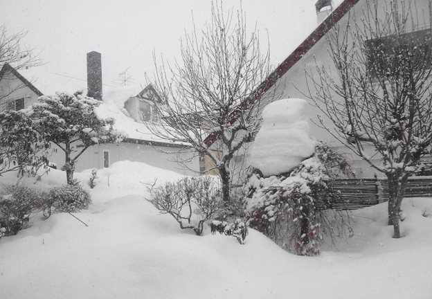 今日の庭の風景