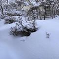 写真: 庭の雪