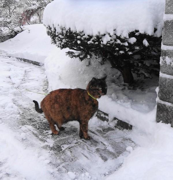 玄関前の雪かき終了