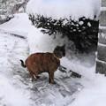 写真: 玄関前の雪かき終了