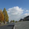 Photos: 雲と木