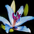 写真: 名前のない花2