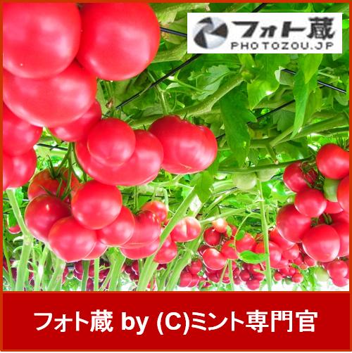 logo_photozo_01