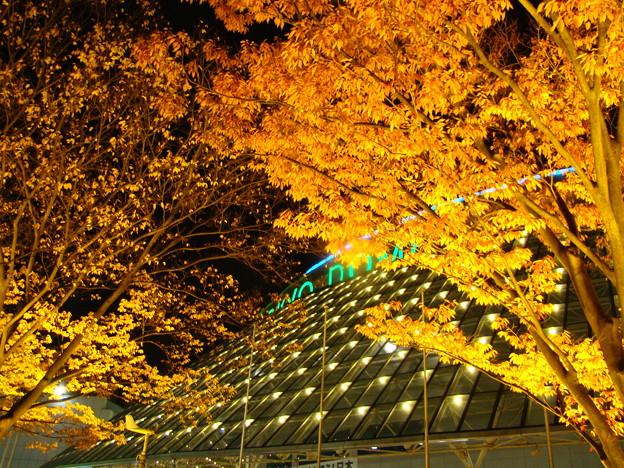 写真: 東京ドームとイチョウ