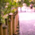 写真: 竹