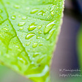 写真: 雨降り DOS7D SP AF90mm F/2.8 Di MACRO 1:1 (Model272E)