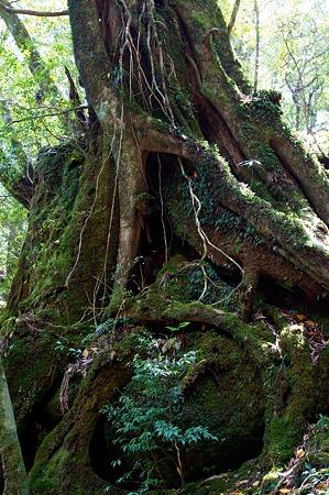 白谷雲水峡の木その6