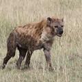 アフリカの動物ポートレイトシリーズ27