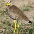 Photos: アフリカの動物ポートレイトシリーズ42