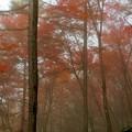 写真: 霧の中の紅葉 1