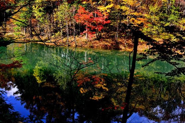 Photos: 青の池 2