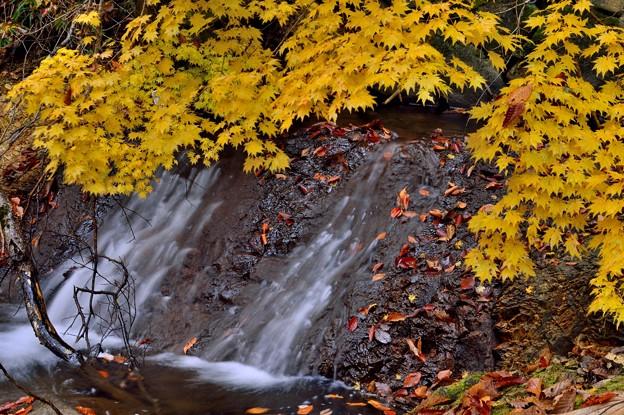 Photos: 紅葉と黄葉