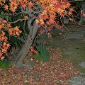 Photos: 紅葉と落葉