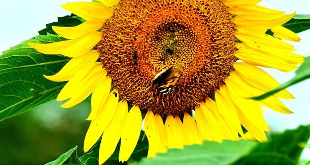 Photos: 蝶と蜂