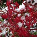 写真: 凍える秋