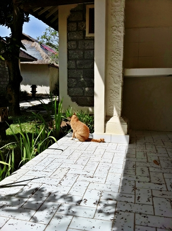 猫とマッタリ