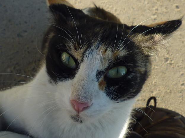 忿怒の芽生え Stray cat at Al Ain National Museum,UAE