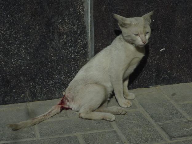 死の恐怖の芽生え   Injured stray cat