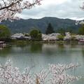 Photos: *いざ乗らん嵯峨野の花の屋形船 Yakatabune ,Osawa Pond   *生き難き命を生きて屋形船浮かべる見れば涙いづるも