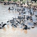 生と死のドラマ ハゲワシとアフリカハゲコウ Vultures & Marabous