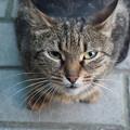 禁欲は辛い Stray Cat in Kazanlak