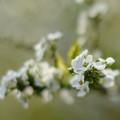 写真: 春の雪