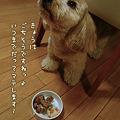 写真: くーかい 3歳の誕生日♪ 3