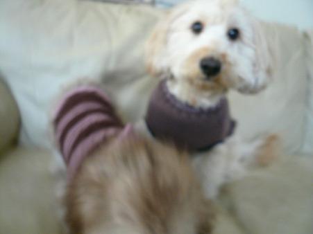 2ワンでセーター 4