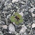 写真: 雑草