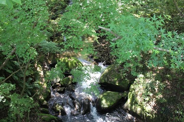 写真: 新緑と清流