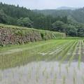 Photos: 坂元棚田
