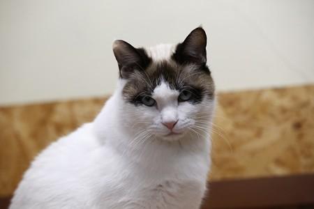 パン「おいらはプライド高きお猫さま」